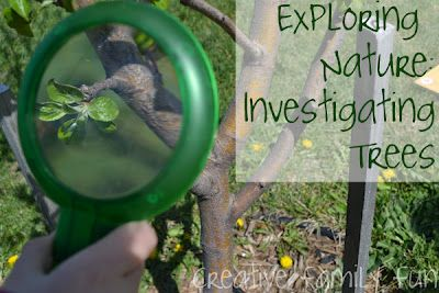 Exploring Nature Investigating Trees Explore Nature Science And Nature Nature Activities