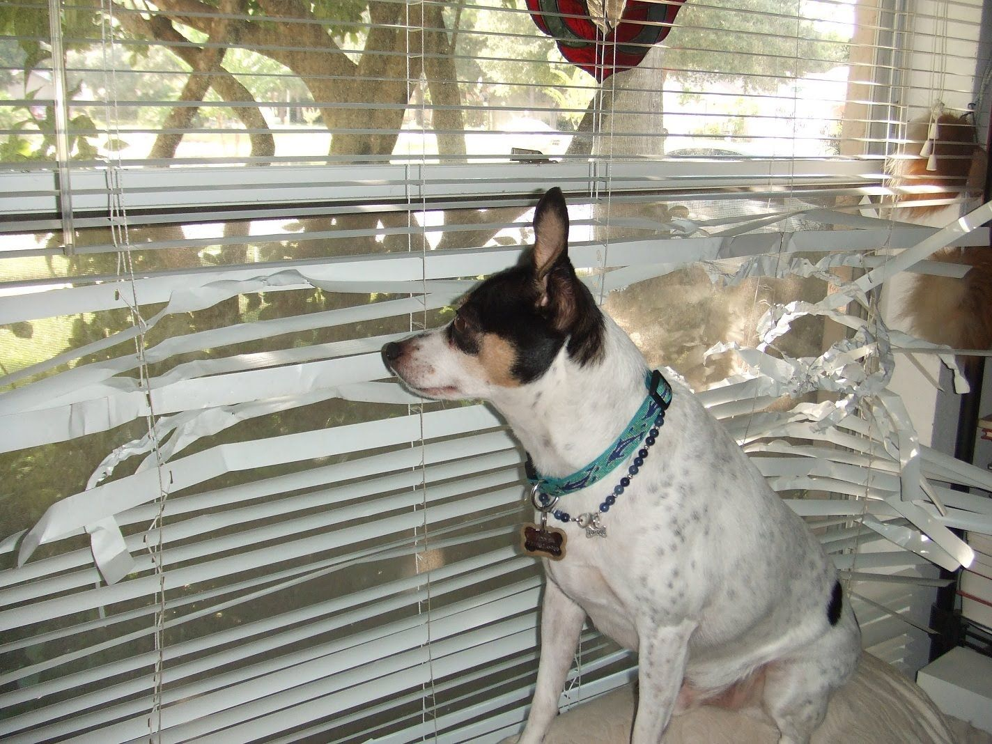 5 Best And Worst Window Treatments For Homes With Dogs Dogs Blinds Pets