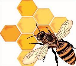 image result for free clip art honeycomb hazel s hope chest rh nz pinterest com honeycomb background clipart honeycomb clipart free