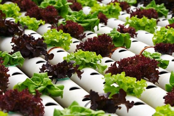 17 Best images about Hydroponics Gardening on Pinterest Gardens