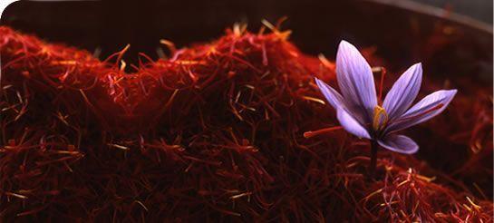 Verdú · Cantó Saffron Spain