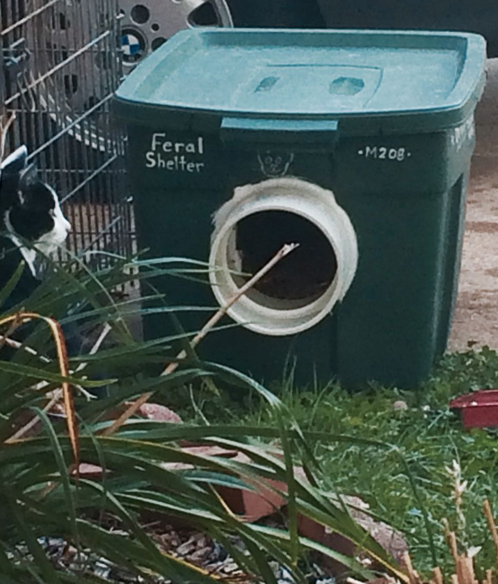 Feral Cat Shelter From Large Rubbermaid Bin And Two Wine Crates Inside Insulated All Around With Cardboard Styrofoam Extra Plastic Outside