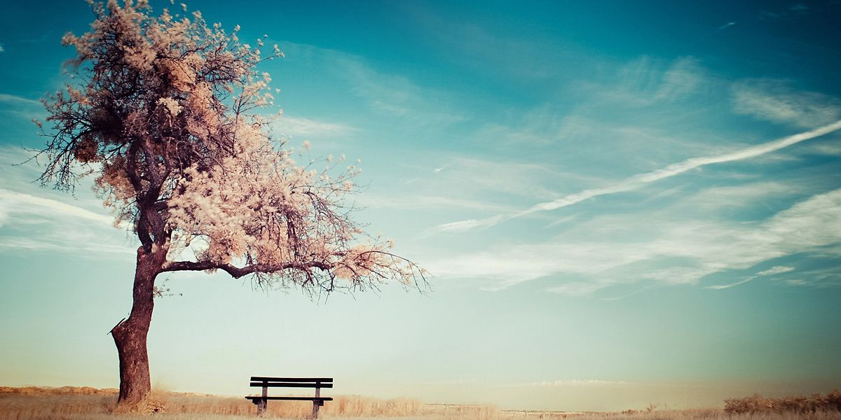 Nature Cherry Blossoms Trees Twitter Cover Twitter Background Twitrcovers With Images Blossom Trees Tree Wallpaper Landscape