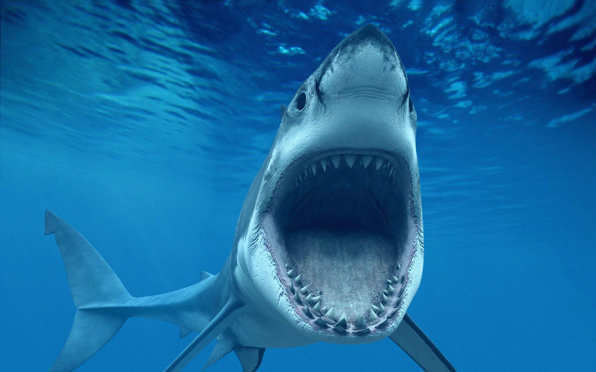 Shark Hd Wallpapers 1080p High Quality Shark Pictures Shark White Sharks