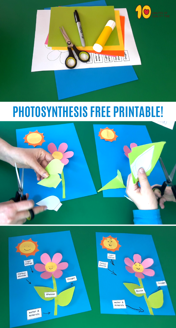 photosynthesis craft for kids science biology for kids science experiments kids. Black Bedroom Furniture Sets. Home Design Ideas