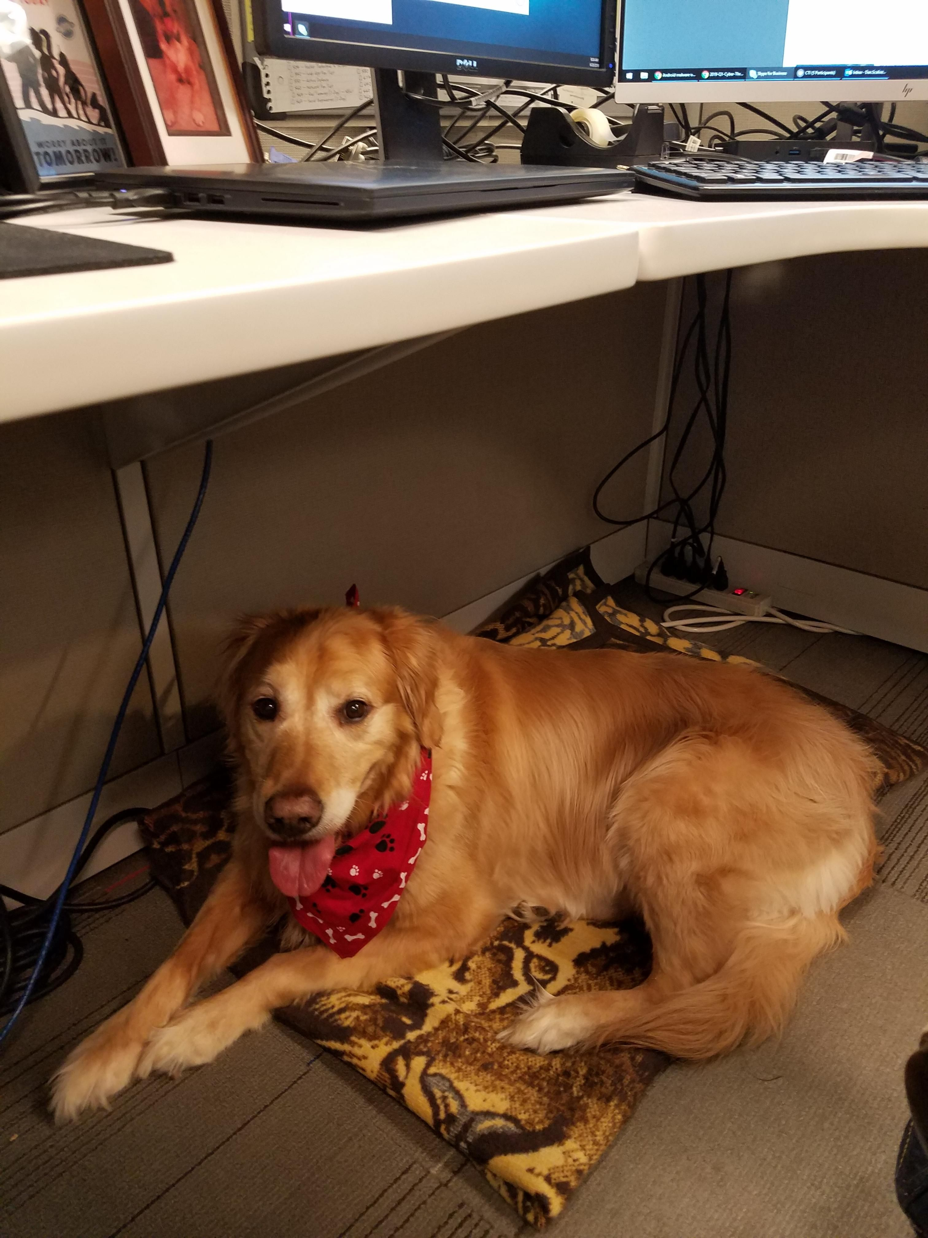 Today Is Take Your Dog To Work Day At My Office Dogs Your Dog Doggy
