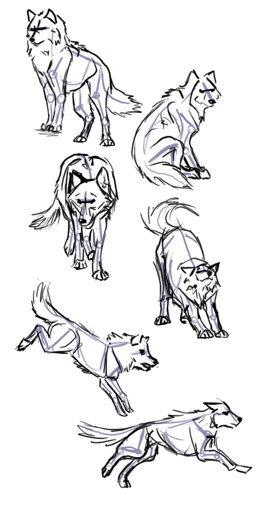 Wolf Poses - How to draw a wolf - animal drawing reference | Drawing ...