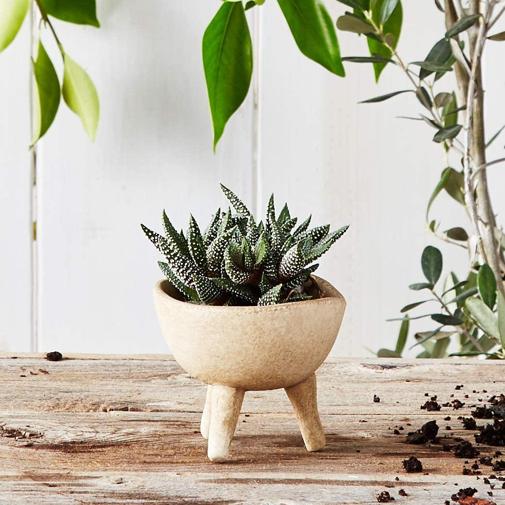 Creative Co Op Small Matte Taupe Terracotta Footed Planter Planters Creative Co Op Terracotta