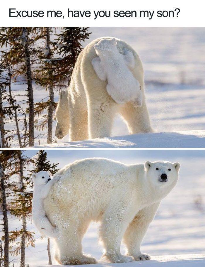 Photo of Lustige Tiermemes des Tages – 30 Bilder Ep10 – Schöne Tierwelt