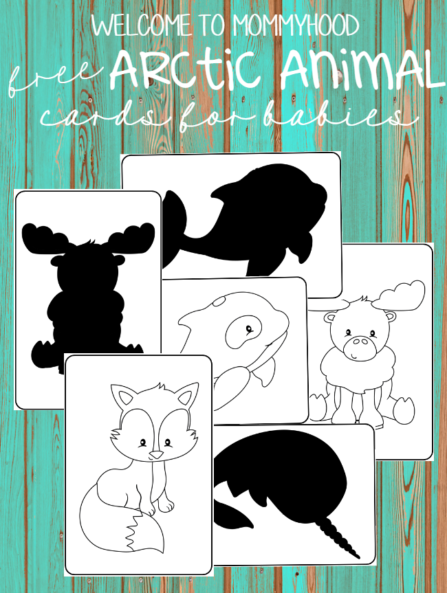 Black And White Arctic Animal Cards Welcome To Mommyhood Arctic Animals Activities Arctic Animals Polar Animals Preschool
