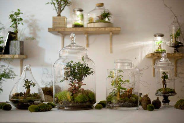 Un terrarium pour ma deco de salon Terraria and Gardens