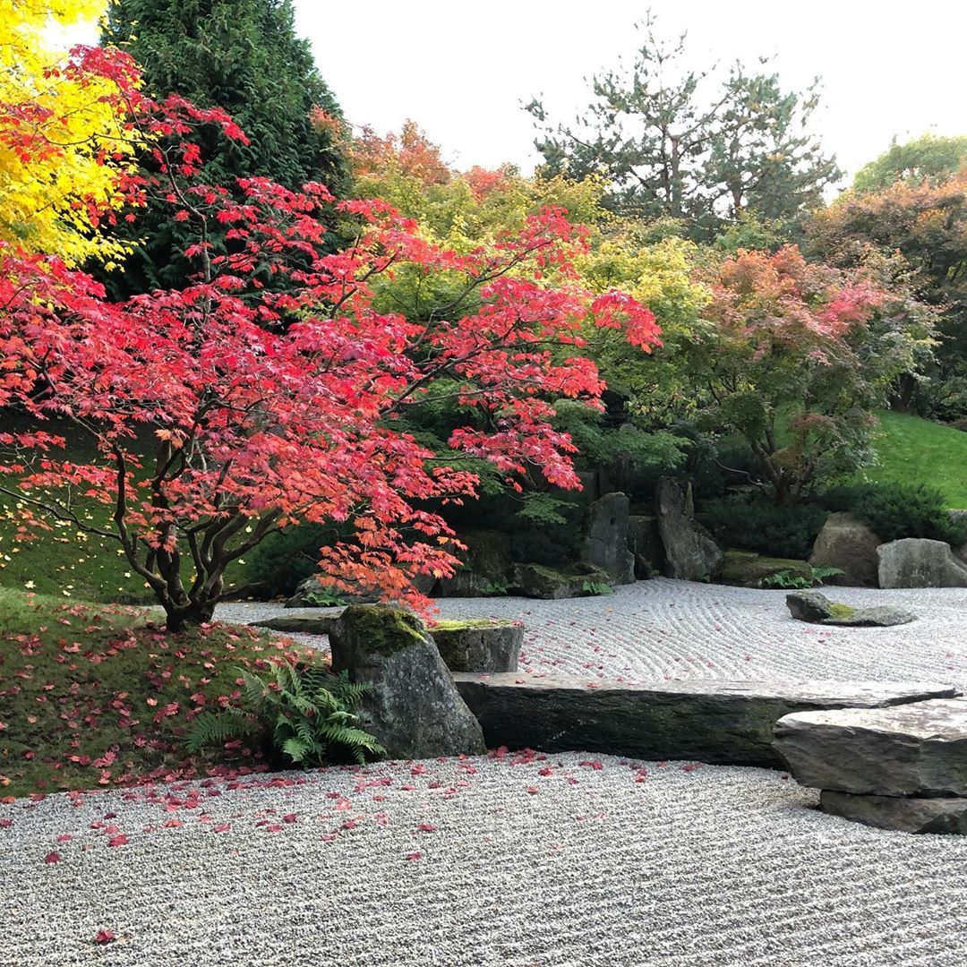 Nofilter Japanischergarten Berlin Marzahn Gartenderwelt Japanischer Garten Garten