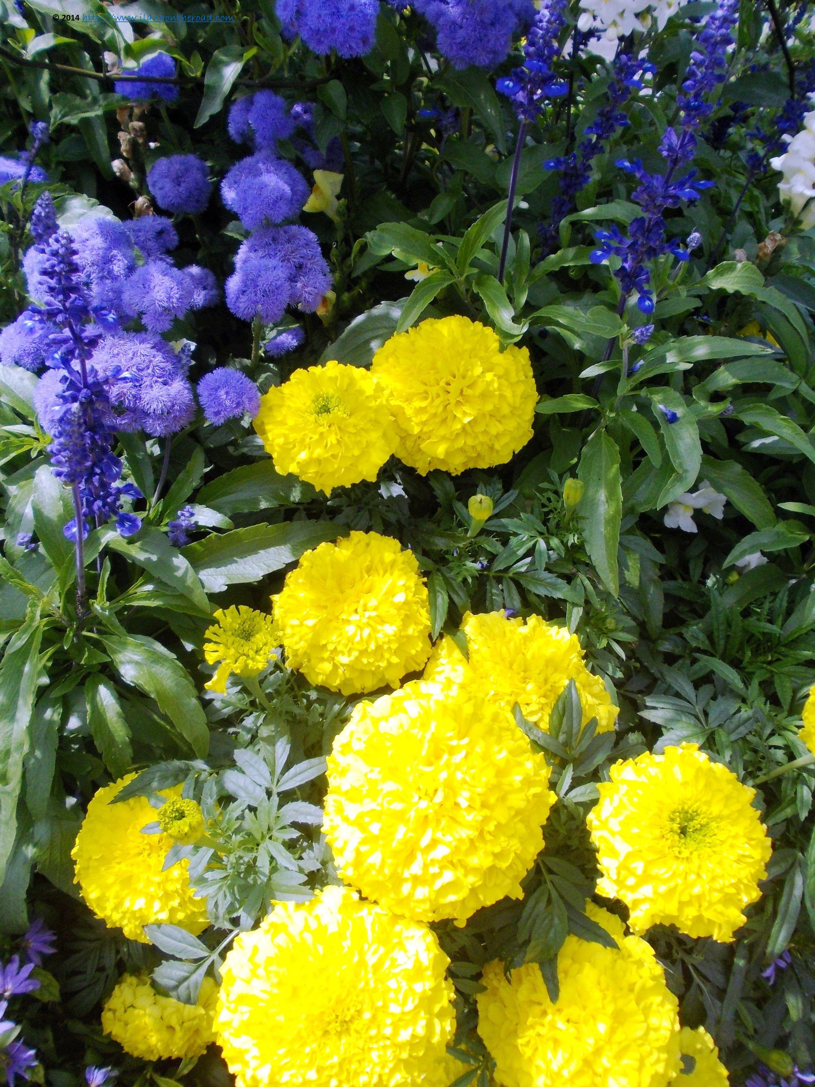 Flowers in munich germany
