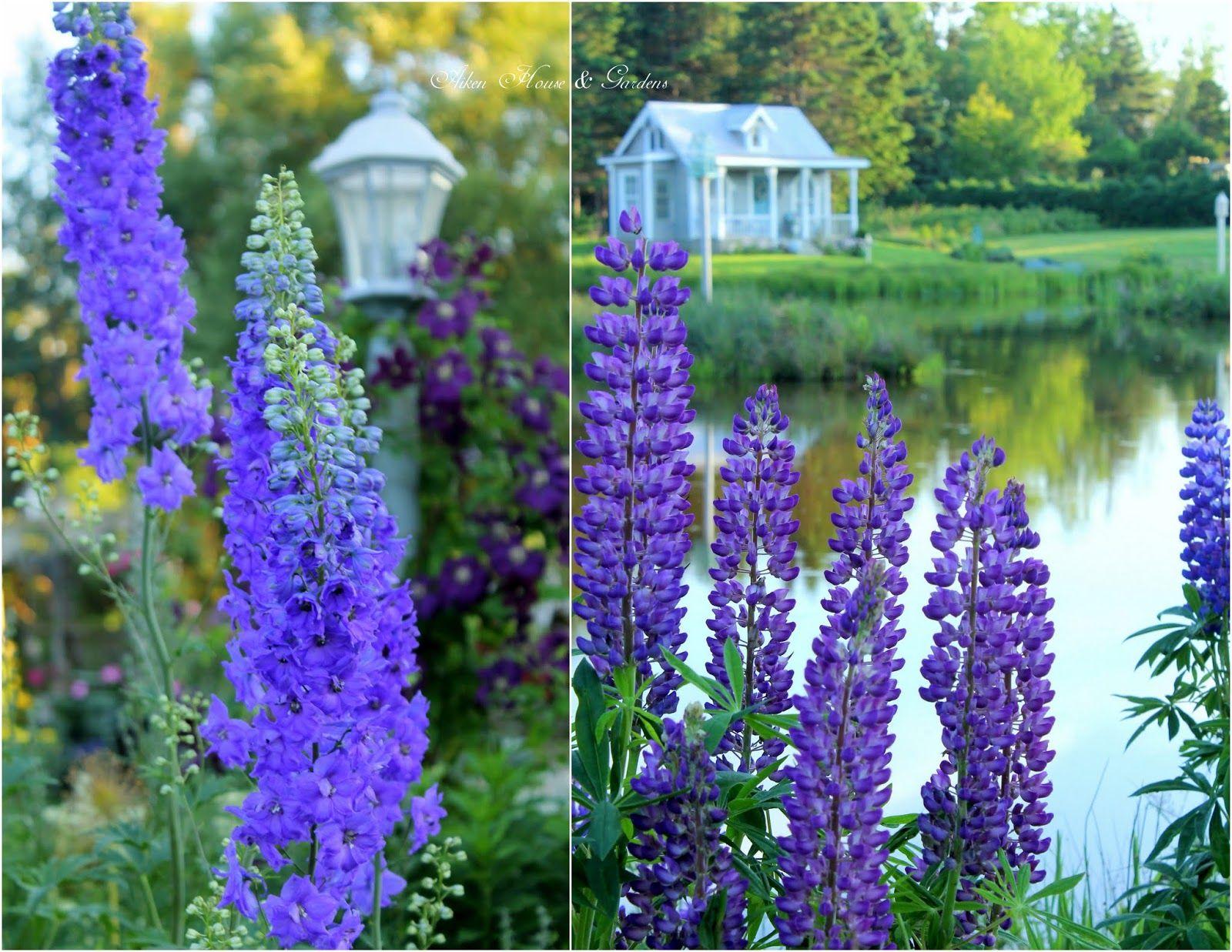 Aiken House & Gardens: The Color Purple | Aiken house & Garden ...