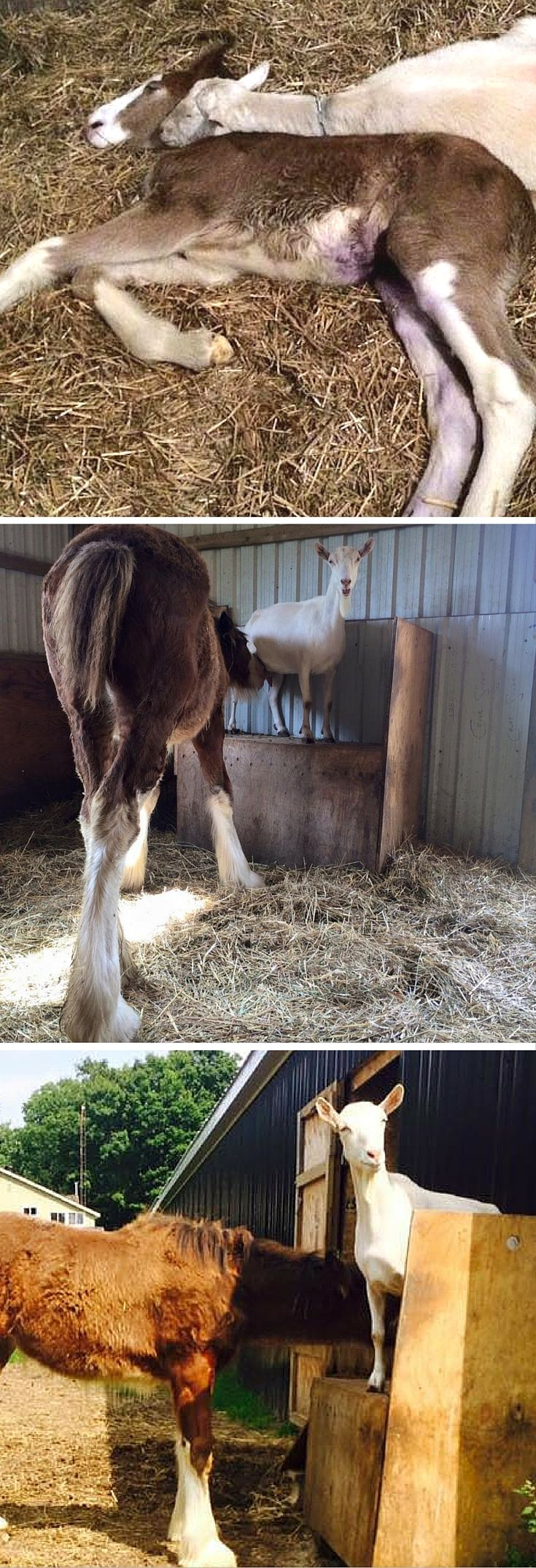 When this foal's mom died just days after she was born