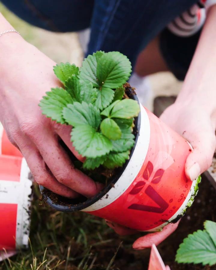 #DIY Idee: Palettenbeet mit Erdbeeren und Kräutern