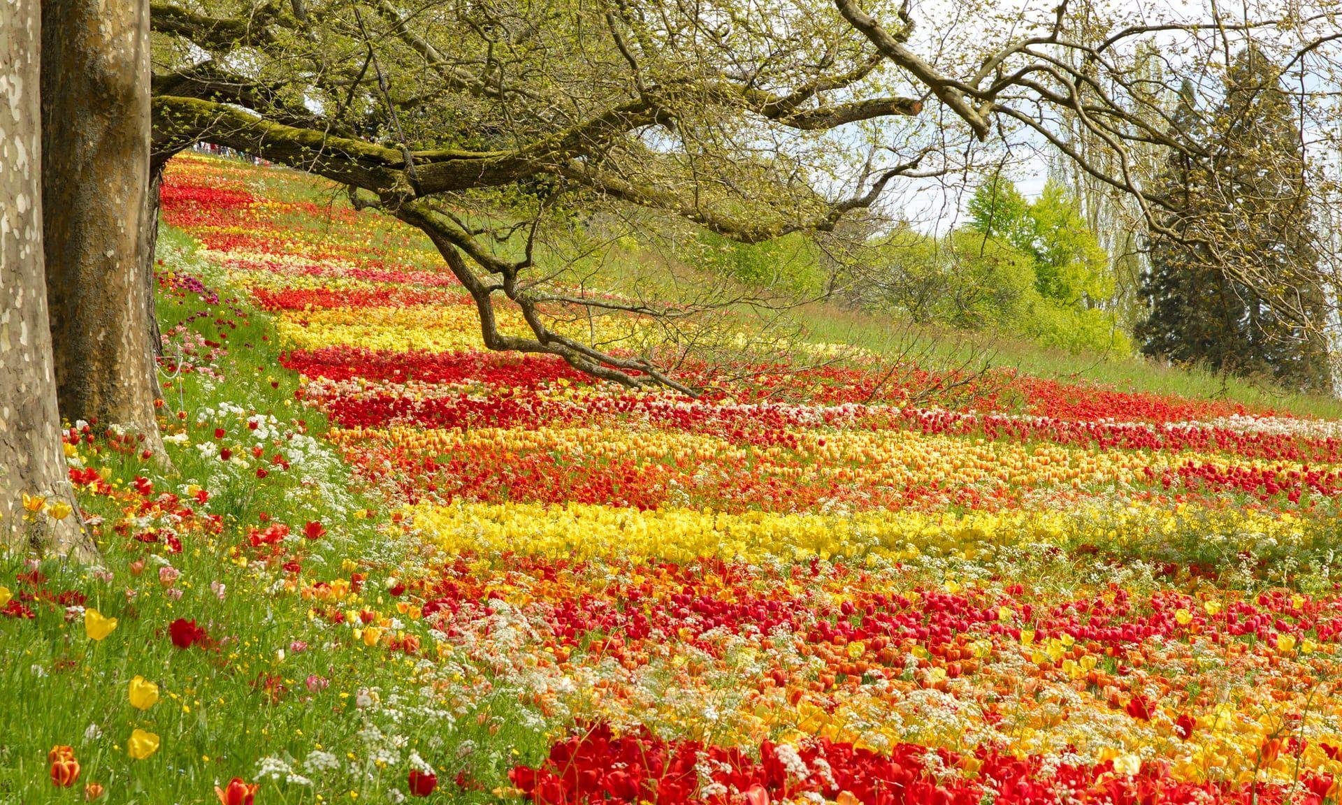 Wild Spring Flowers In Europe Readers Travel Tips Flowers