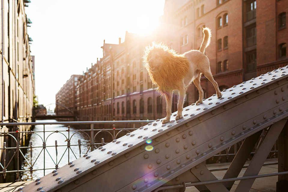 Homeless Dog Found On The Streets Becomes A Lion In This Epic - Homeless dog found on the streets becomes a lion in this epic photoshoot