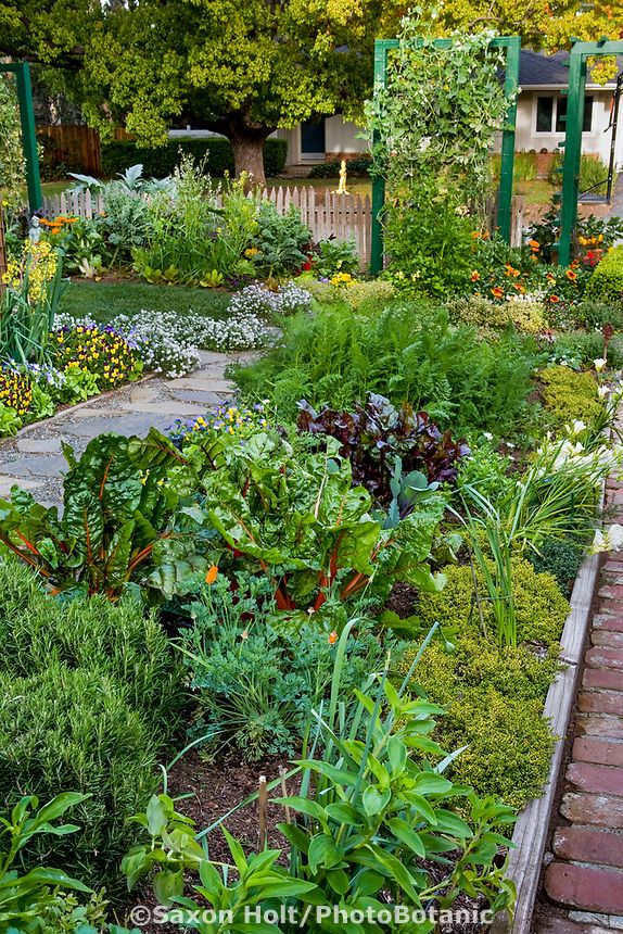 Ornamental Edible Garden Mixed Bed Of Herbs Vegetables And Flowers Between Paths In Rosalin Front Yard Garden Design Front Yard Garden Front Yard Landscaping