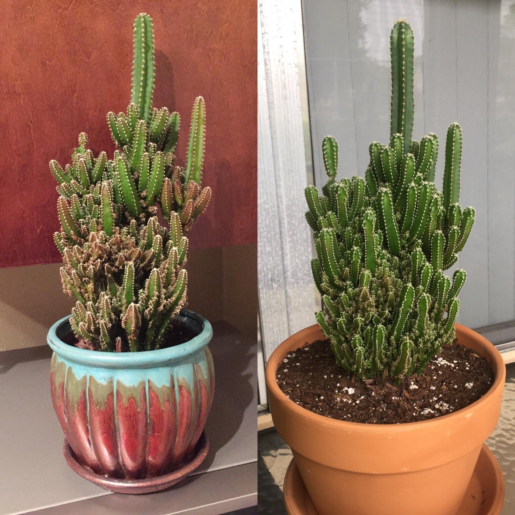 Bigger Pot For My Fairy Castle Fairy Castle Cactus Planting Flowers Fairy Castle