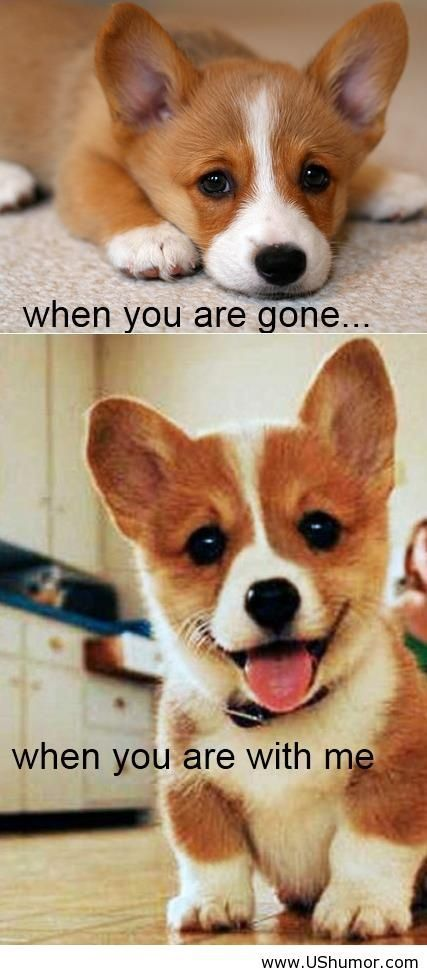 Because I Am Your Dog And I Love You Us Humor Funny Pictures Quotes Pics Photos Images Cute Animals Baby Dogs Cute Dogs