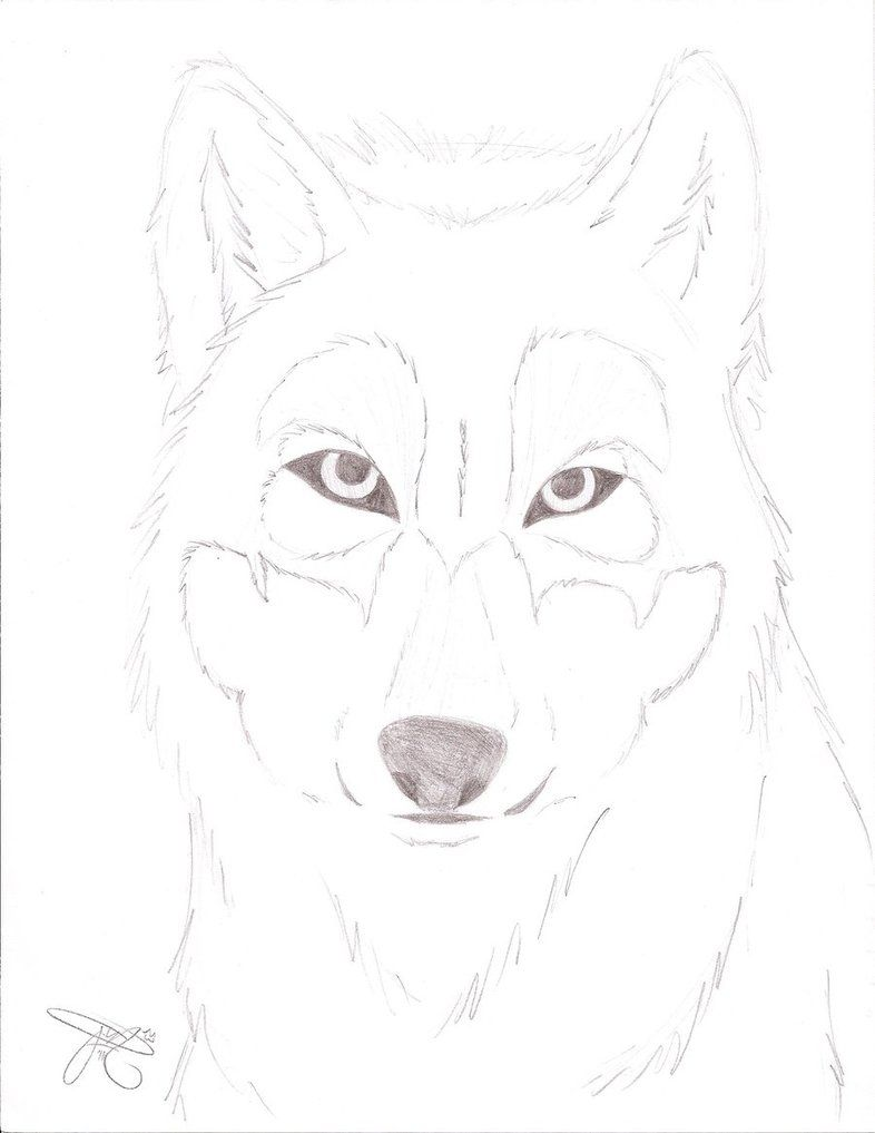 Wolf face sketch by frootloops2 on deviantart