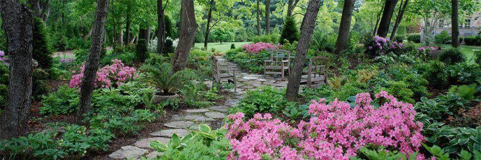 Woodland Style Landscaping Ideas Sisson Landscapes Landscape Design Maintenance Great Fa Woodland Garden Garden Landscape Design Shade Evergreen Shrubs