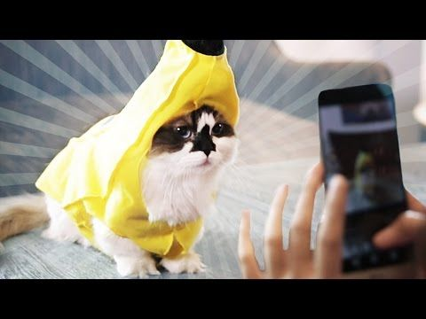 Making A Living As An Instagram Cat - YouTube