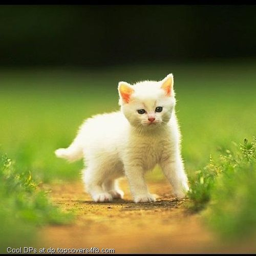 Cute White Cat Cool Display Pictures Animals Cats And Kittens Happy Kitten