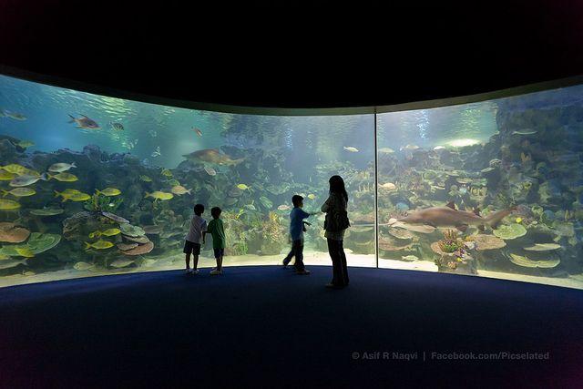 TurkuaZoo Aquarium, Istanbul, Turkey