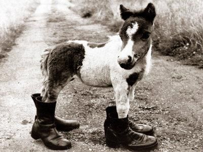 foal in boots