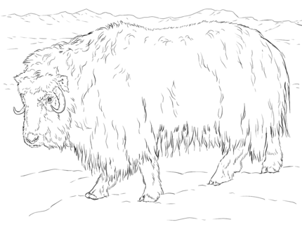 Click Realistic Musk Ox Coloring