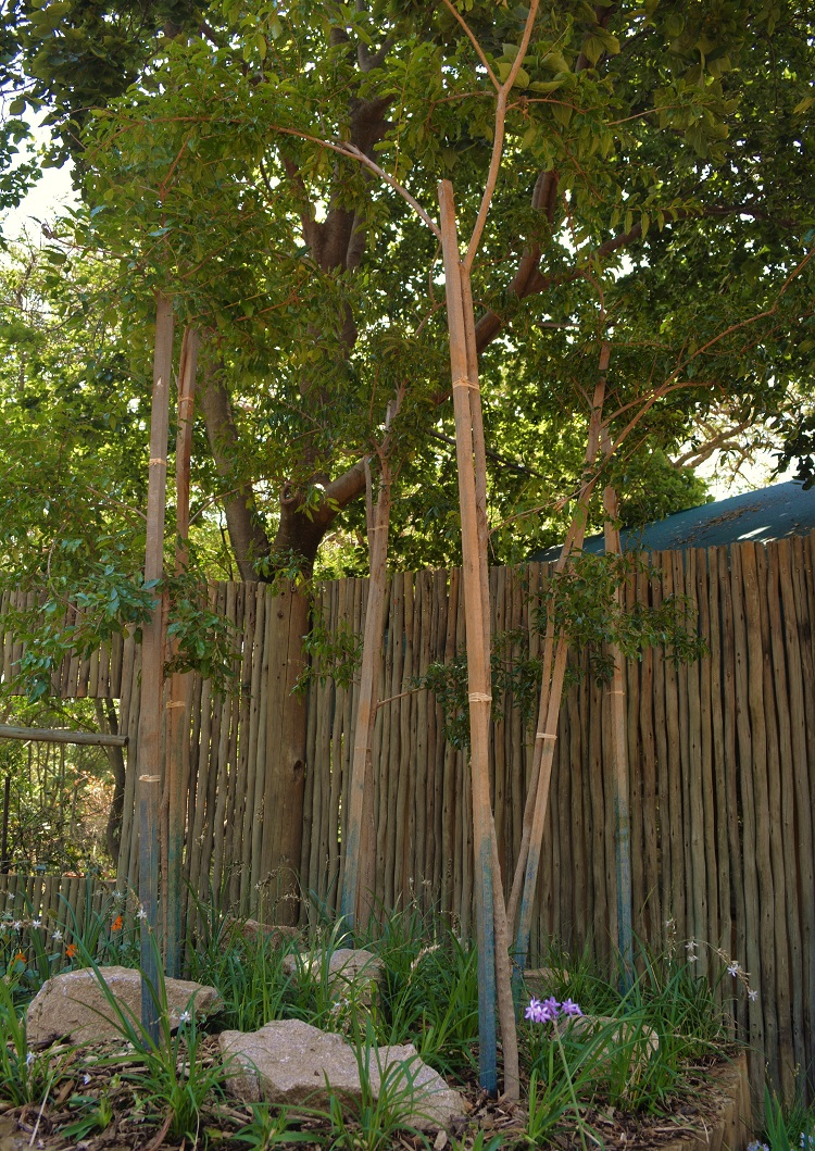 4468fdecd94929be866228611f96829f - Trees For Small Gardens South Africa