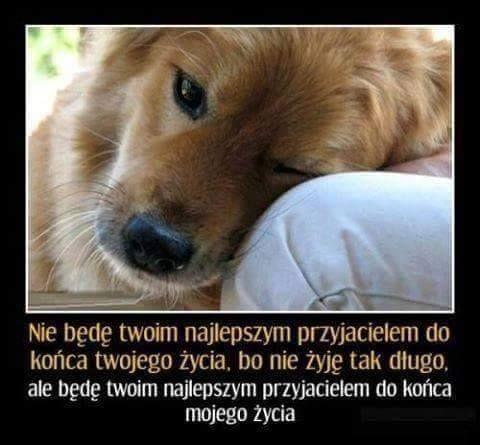 Krzysiek Lopatka jakoi käyttäjän Traktuję psa... - https://www.facebook.com/krzysiek.lopatka/posts/461714354037860