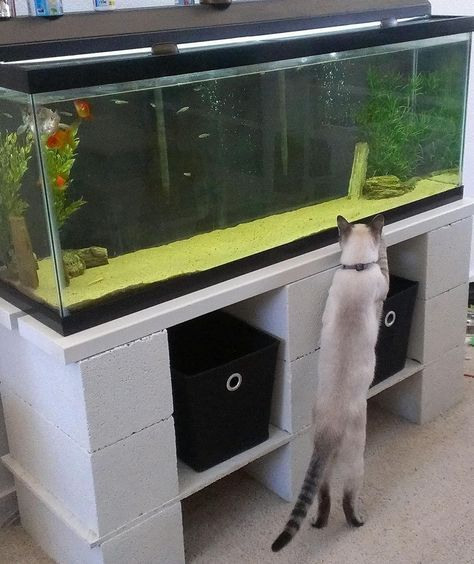Aquariums Are A Beautiful Addition To The Home They Are Also Insanely Heavy And Fragile Think About It Aquarium Stand 55 Gallon Aquarium Stand Diy Aquarium