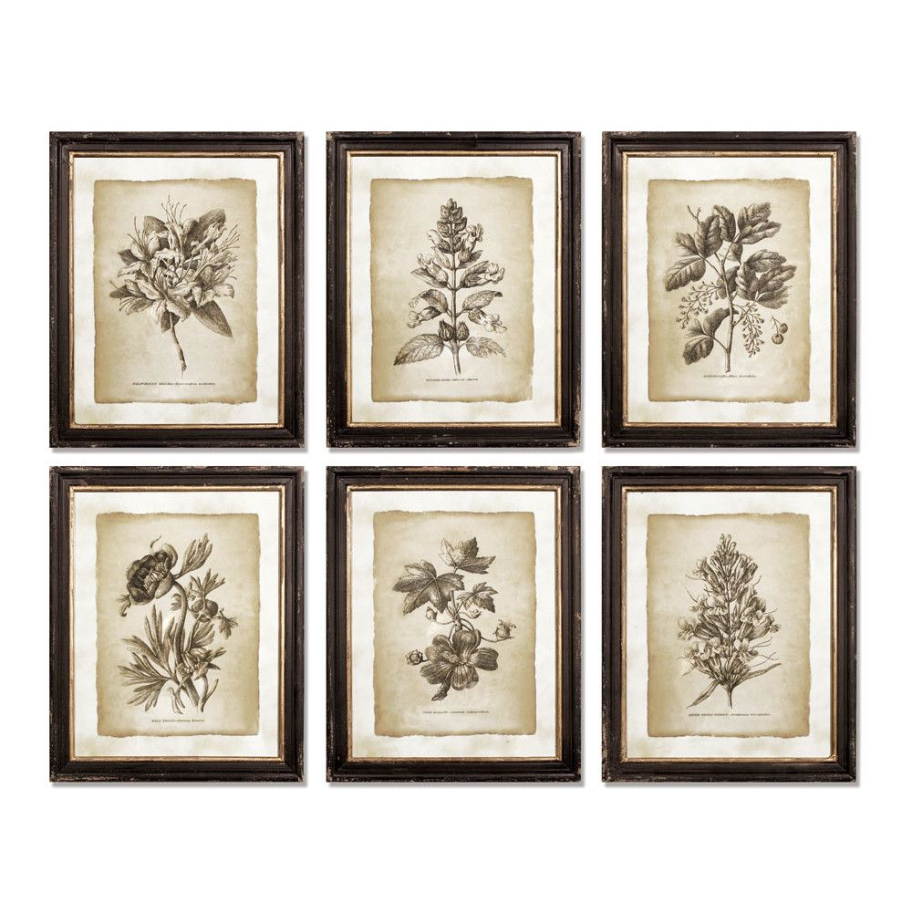 Napa Home & Garden Vintage Floral 6 Piece Framed Graphic