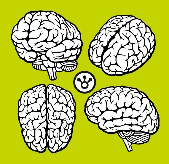 4 #cerebros