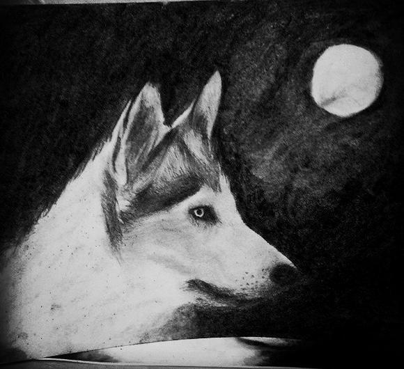 Dibujo de un lobo en blanco y negro a carboncillo  Dibujos