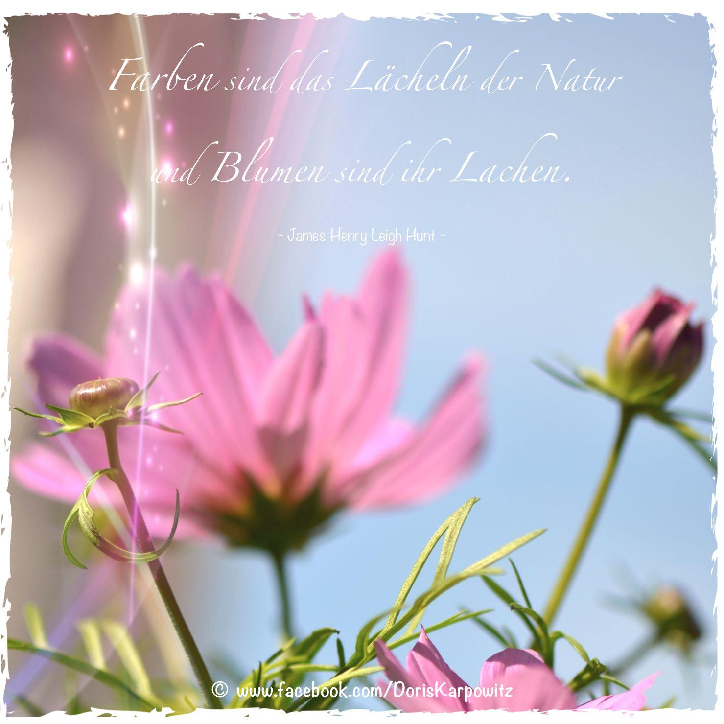 Farben sind das l cheln der natur und blumen sind ihr - Blumen zitate ...
