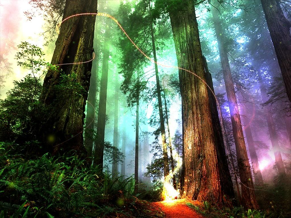 Lunicorne Forest