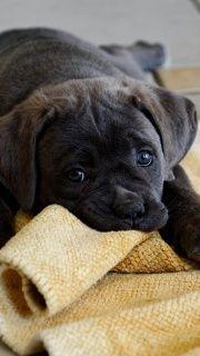 Cute Puppy screenshot #1