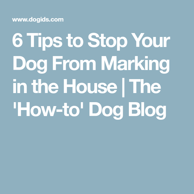 Learn How To Stop A Dog From Marking