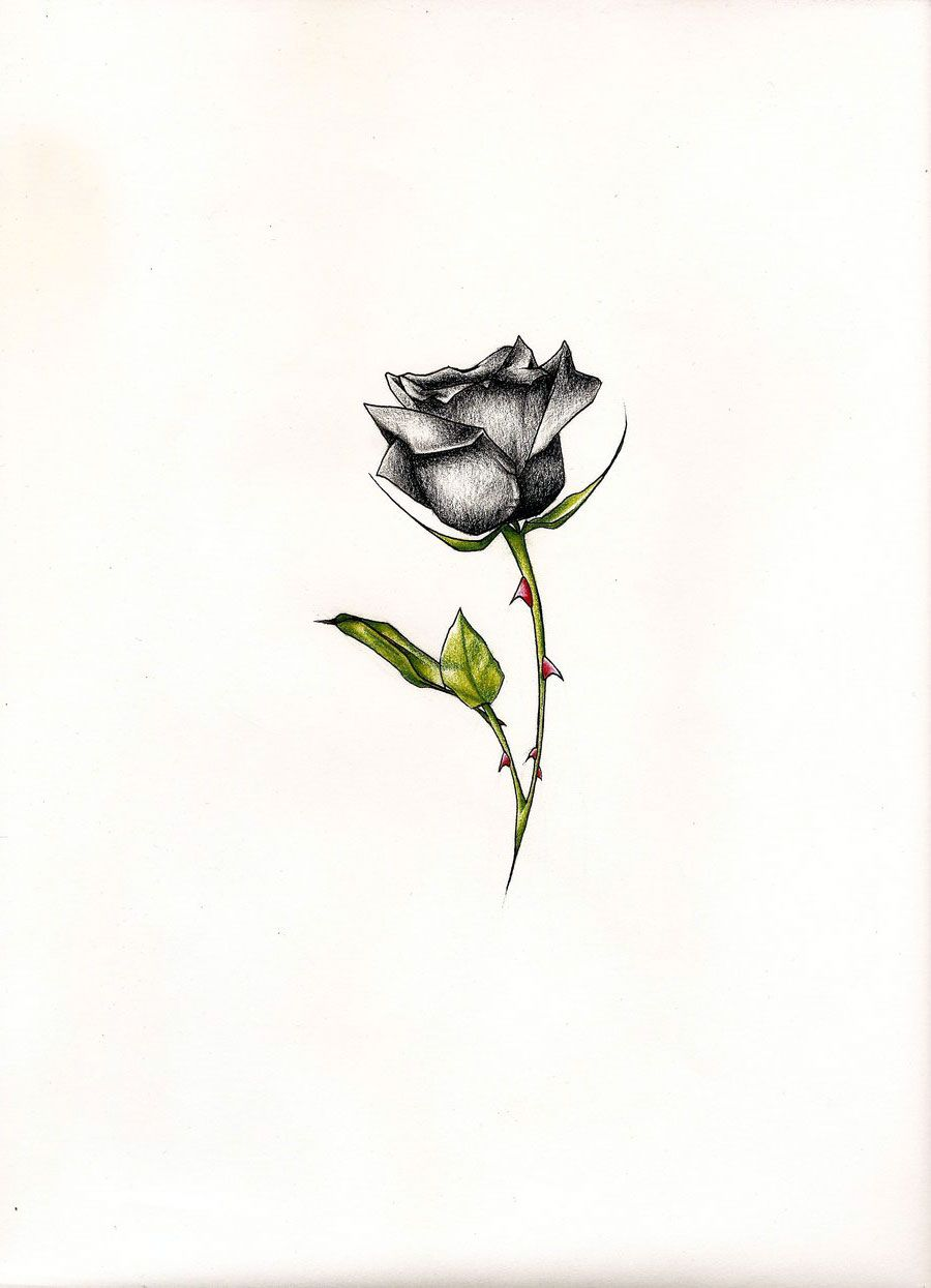 Black Rose Tattoo Pictures