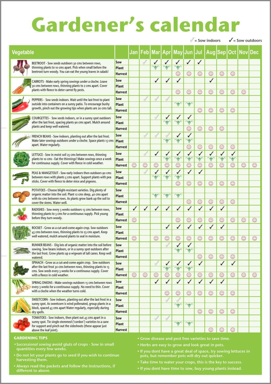 A3 Beginner Gardener 39 S Vegetable Chart Gardening Calendar
