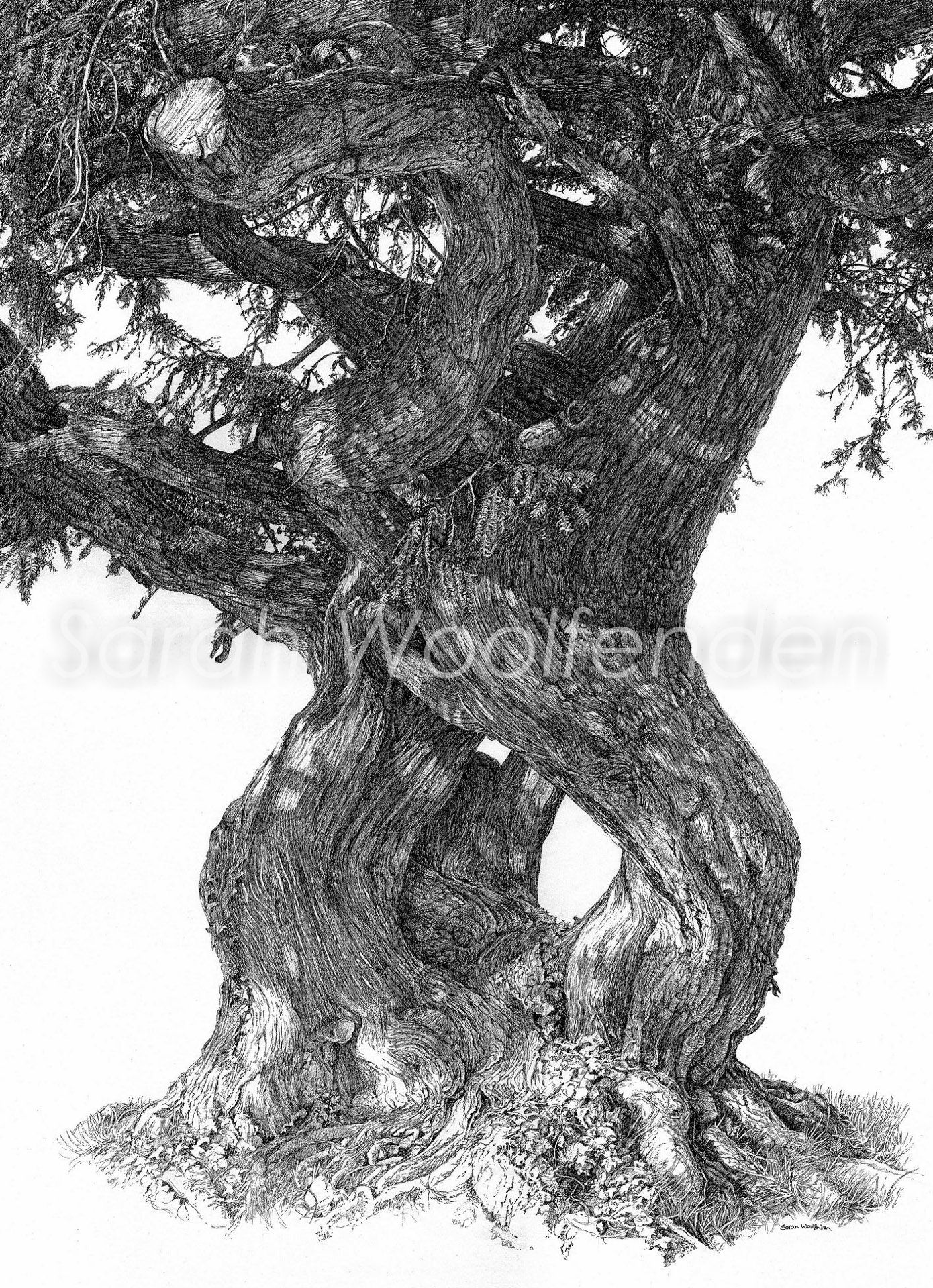 Twisted Yew Print 22 Cm X 31 Cm Prints Monochrome Art Large Poster Follow the simple instructions and in no time you've created a great looking tree drawing. pinterest