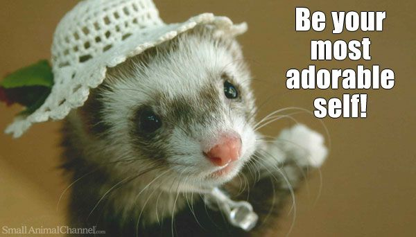 Enjoy These Fun Ferret Pictures Cute Ferrets Best Small Pets Small Pet Supplies