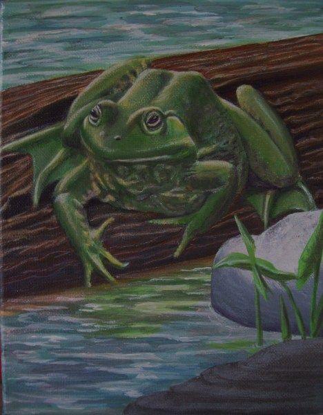 FroggyThree (с изображениями) | Лягушка, Рептилии, Картинки
