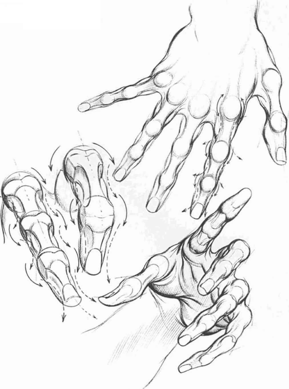 Human Muscle Drawings Comics Hand Research Pinterest Muscles