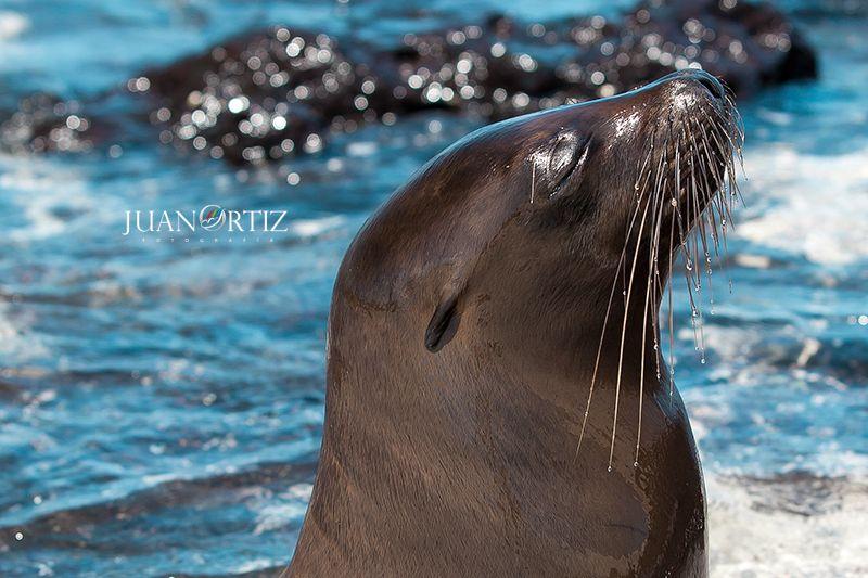 #galapagosislands #islasgalapagos #lobomarinao #ecuador