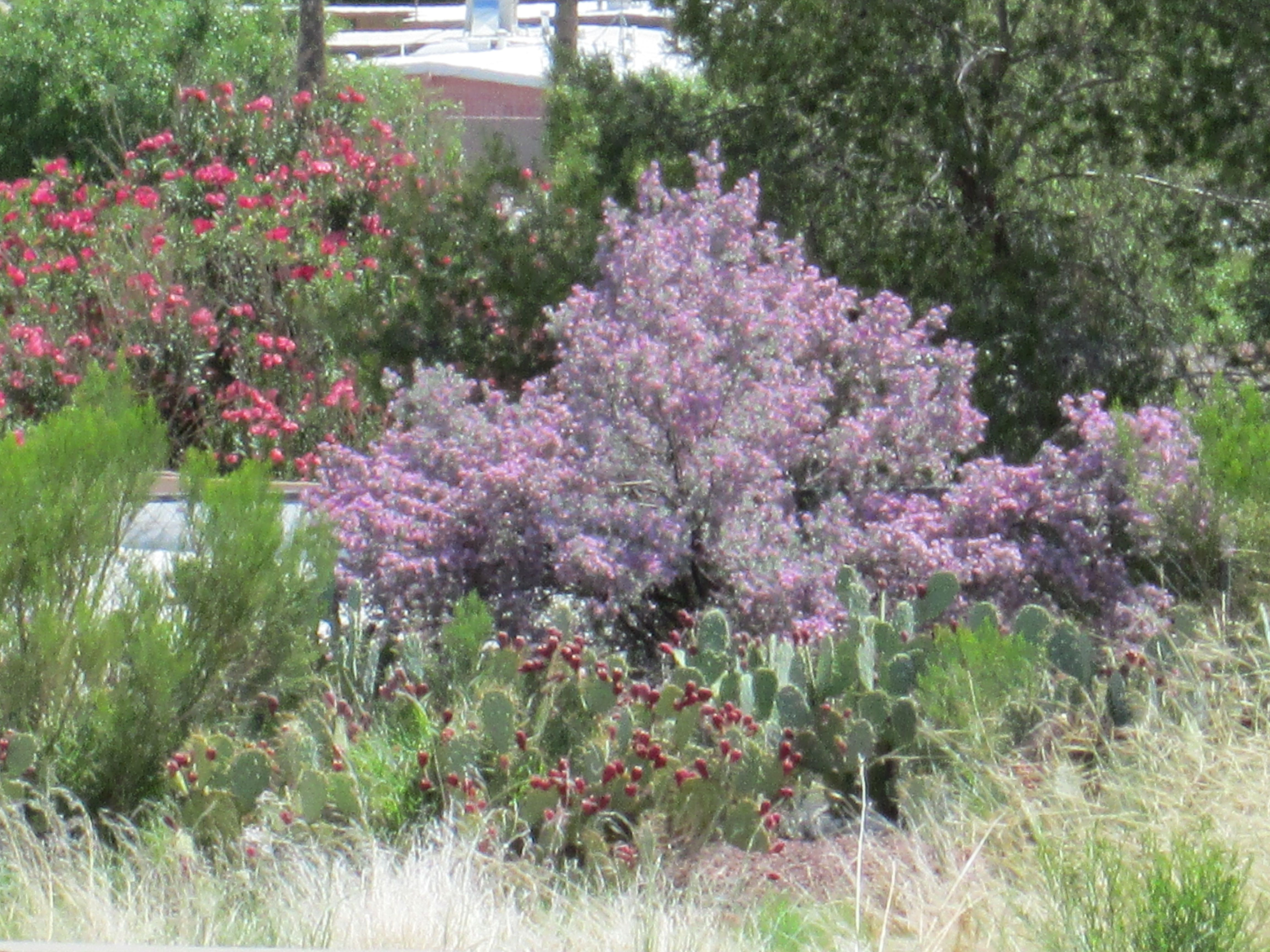 Best Ideas For Choosing Plants With Colors Flowers Drought